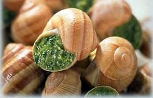 Temps de cuisson escargots
